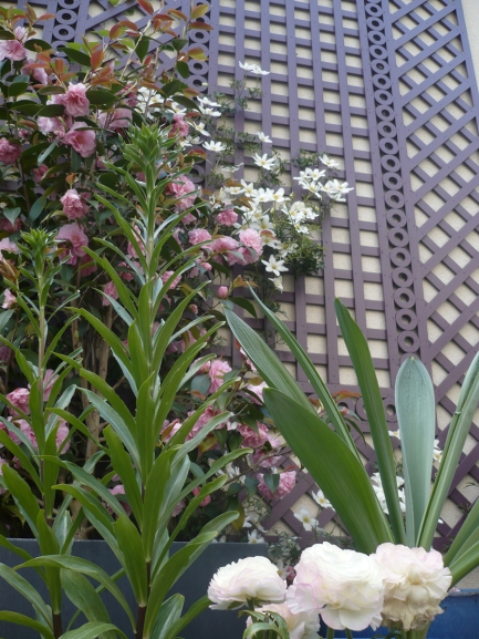 Le treillage accueille les plantes grimpantes