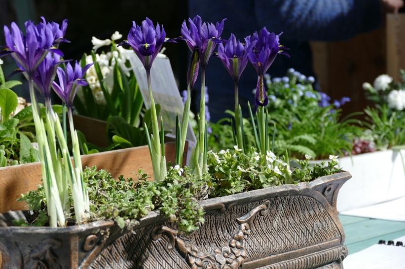 P1060263-Jardinière iris