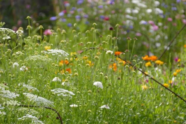 P1070058 - fleurs 13 juillet